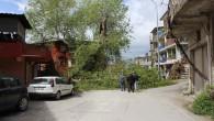 2 Bin Yıllık Çınar Ağacı Şiddetli Rüzgâra Dayanamadı