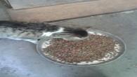 Hatay Büyükşehir Belediyesi Sokak Hayvanlarının Unutmadı
