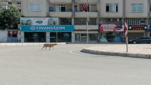 Boş Kalan Cadde Ve Sokaklar  Hayvanlara Kaldı