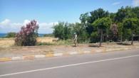 Hatay Büyükşehir belediyesinden yabani ot temizliği