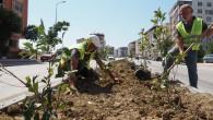 Hatay Büyükşehir Belediyesi ağaçlandırma çalışmalarını sürdürüyor