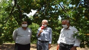 Arsuz ilçesindeki  Kayısı üreticileri Devletten destek bekliyor
