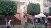 Hatay Büyükşehir Belediyesinden ağaç budama çalışması