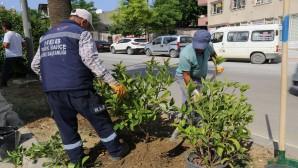 Hatay Büyükşehir Belediyesinden Ağaçlandırma çalışmalarına devam