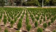 Orman Genel Müdürü Bekir Karacabey, Dünya Çevre Günü kapsamında açıklama yaptı 'Her insan doğaya 210 ağaç borçlu'
