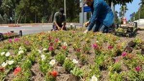 Hatay Büyükşehir Belediyesi Hatay'ı Rengarenk çiçeklerle donatıyor