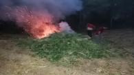 Yakalanan 2221 dişi hint keneviri ile  12750 gram esrar  yakılarak imha edildi