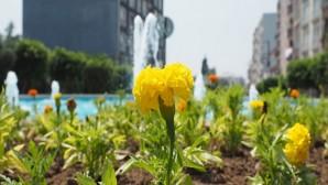 Hatay Büyükşehir Belediyesi Hatay'ı  Çiçeklerle  bezendiriyor