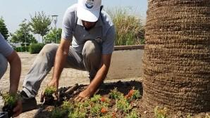 Hatay Büyükşehir Belediyesi Hatay'ın her köşesini çiçeklendiriyor