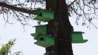 Antakya Belediyesinden ağaçlara kuş yuvaları