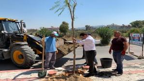 Başkan Eryılmaz Yaşar Kemal Caddesinde ağaçlandırma çalışmalarını yerinde inceledi