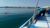 Hatay Büyükşehir Belediyesinden Deniz  ve kıyılardaki temizlik çalışmalarına devam ediyor