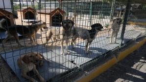 Hatay Büyükşehir Belediyesi Hayvan Barınağının kapılarını herkese açtı