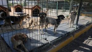 Hatay Valiliği Hatay Büyükşehir Belediyesi Hayvan Bakım ve Rehabilitasyon Merkezi'nde Yaşanan Olaylarla İlgili Basın açıklaması yaptı