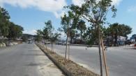 Hatay Büyükşehir Belediyesi Yeşil alanları arttırıyor