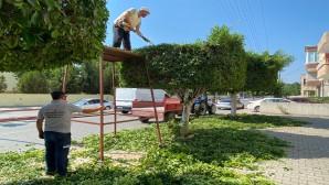 Hatay Büyükşehir Belediyesi Park Bahçe ekibi çalışmalarını sürdürüyor