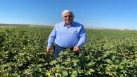 Hatay Milletvekili İsmet Tokdemir'den öneri: Pamuk hasat dönemi yaklaşıyor, tedbirlerimizi alalım
