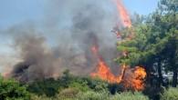 Hatay Büyükşehir Belediyesi İtfaiyesinden Yangına anında müdahale