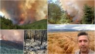 Hatay Tabiatı Koruma Derneği Başkanı Abdullah Öğünç: Ormanlar gibi biz de yangınla yaşamaya uyum sağlamalıyız