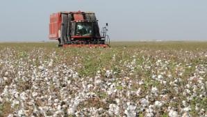 Amık Ovası  çiftçileri; Maliyet altında pamuk fiatı beklemiyoruz