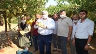 CHP Hatay Milletvekili İsmet Tokdemir: Hassa'mızın güzel üzümü para etmiyor, üreticilerimiz kan ağlıyor!