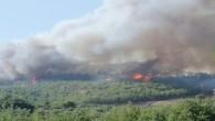 İskenderun'da korkutan yangın