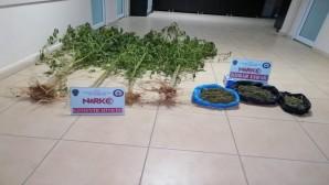 Defne Harbiye'de Esrar ve dişi hint keneviri yakalandı