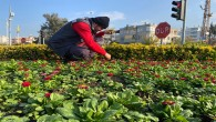 Hatay Büyükşehir Belediyesinden  Payas ve Dörtyol ilçelerinde peyzaj çalışması