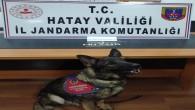 Jandarma Karlısu mahallesinde bir evde 121 Captagon hapı ele geçirdi