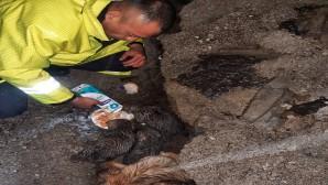 Sevimli köpeklerin imdadına Hatay Büyükşehir Belediyesi itfaiyesi yetişti