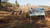 Hatay Büyükşehir Belediyesi, 4 bin 500 fıstık çamı fidanını toprakla buluşturdu