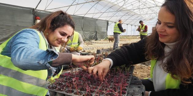 Hatay Büyükşehir Belediyesi, yetiştirdiği bitkileriyle peyzaj düzenlemesi yapıyor