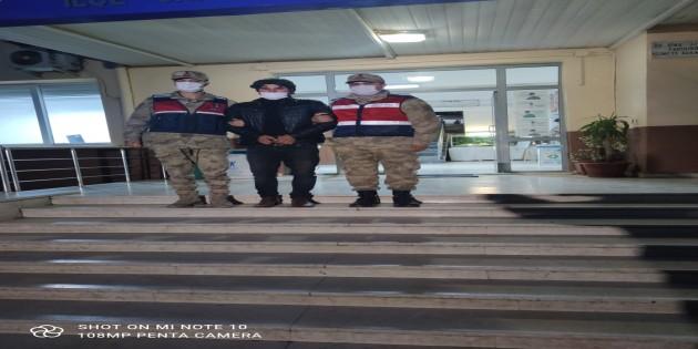 Jandarma 7 suçtan aranan kişiyi Narenciye bahçesinde yakaladı