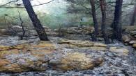 Hatay Büyükşehir Belediyesi itfaiyesi Çaksına mahallesinde çıkan orman yangınını söndürdü