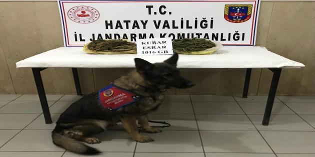 Jandarma Hassa'da 1.016 gram esrar yakaladı