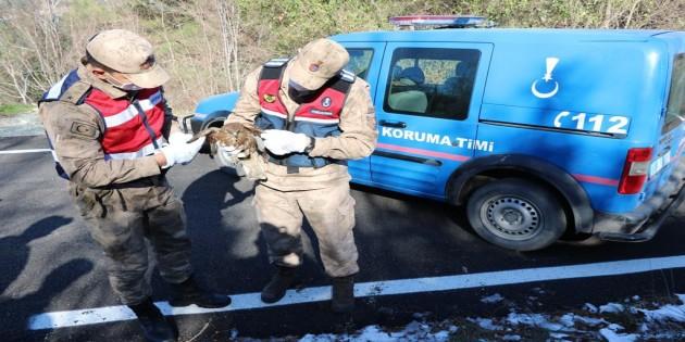 İskenderun'da Şahin Kırıkhan ilçesinde de  Atmaca türü iki kuş yaralı halde bulundu