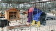 Hatay Büyükşehir Belediyesinden  Yayladağı'na yeni Hayvan barınağı