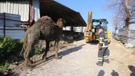 Hatay Büyükşehir Belediyesi İtfaiyesi, su kanalına düşen Deveyi kurtardı