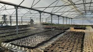 Hatay Büyükşehir Belediyesinden bitki üretimine devam