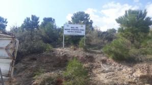 Doç. Dr. Nuray Ergüneş Oruç anısına hatıra ormanı