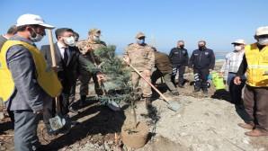 Amanoslar'da bir taraftan PKK temizleniyor, diğer taraftan yakılan ormanlar dikiliyor!