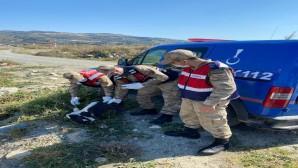 Jandarma, yaralı Leylek'i dere kenarında buldu