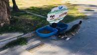 Antakya Belediyesi: Can dostlarımız için su ve mama bırakıyoruz