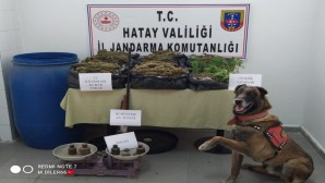 Satışa hazır 12 kilo kubar esrar ile 139 kök dişi hint keneveri yakalandı