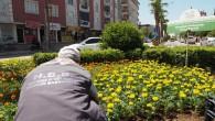Hatay Büyükşehir Belediyesi Reyhanlı caddelerini yeşillendiriyor