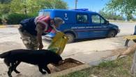 Jandarma Sokak Hayvanlarına Yönelik Besleme Faaliyetini sürdürdü
