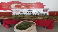 Jandarma Serinyol'da  Uyuşturucu madde ve dişi hint keneviri yakaladı