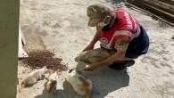 Jandarma yine Sokak Hayvanlarını beslemeyi unutmadı