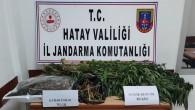 Jandarma Antakya'da 769  kök hint keneviri ile 750 gram esrar ele geçirdi