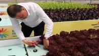 Başkan Savaş, topraksız alanda yetiştirdikleri süs bitkilerinin ilk hasadını yaptı